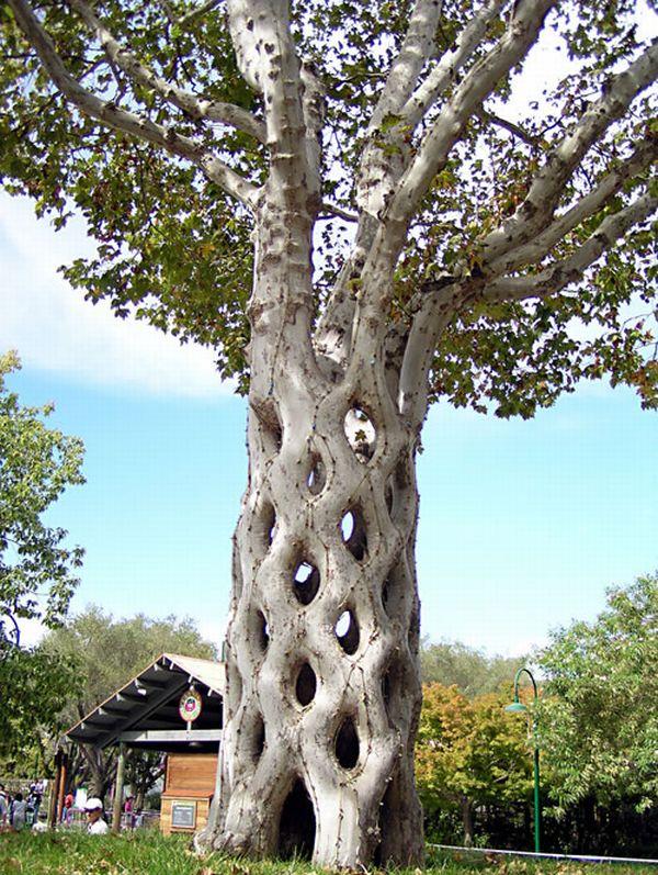 Axel Erlandson Circus Tree 10
