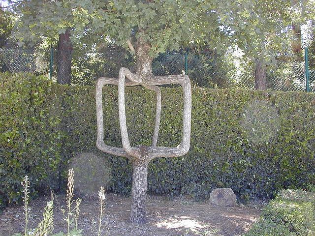 Axel Erlandson Circus Tree 3