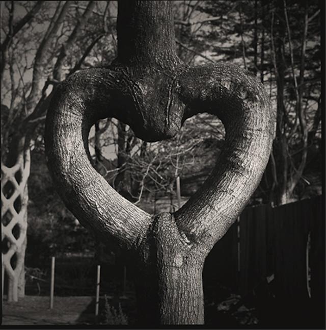 Axel Erlandson Circus Tree 4