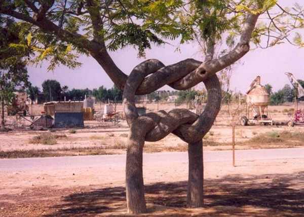 Axel Erlandson Circus Tree 5