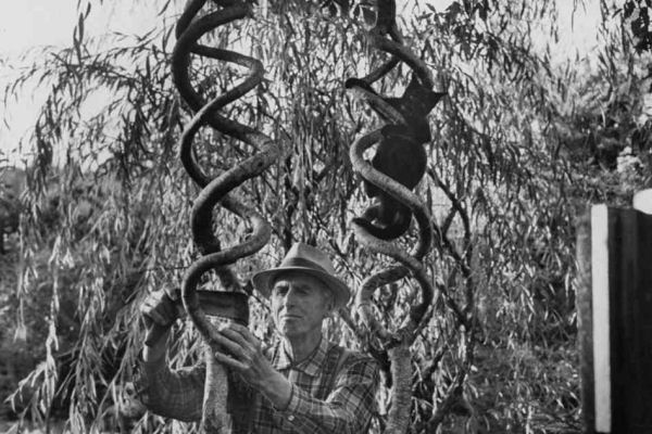 Axel Erlandson Circus Tree 7