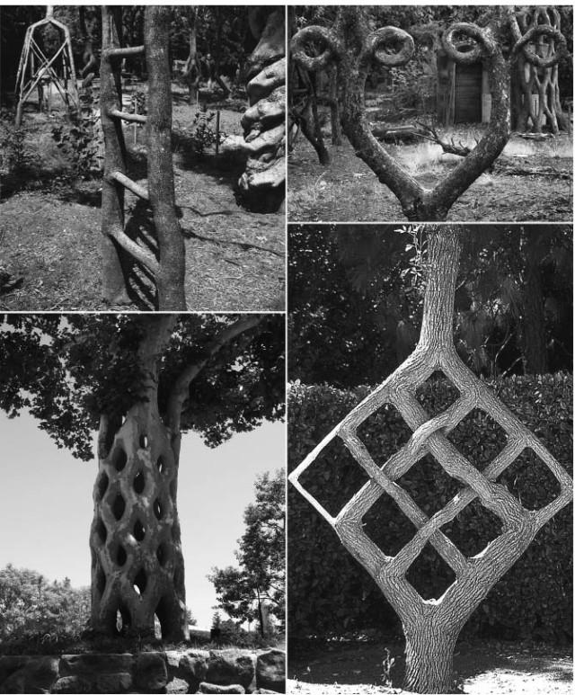 Axel Erlandson Circus Tree 8