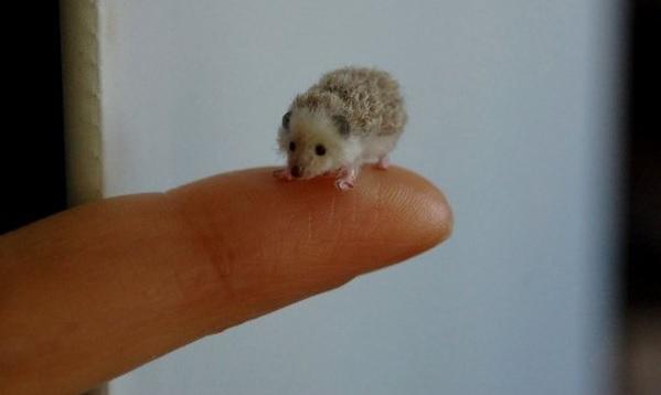 Miniaturne zvieratka od reve 11