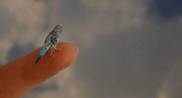 Miniaturne zvieratka od reve 13