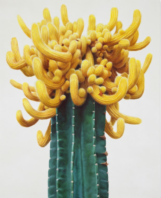 Hyperrealistické maľby kaktusov od Kwang-Ho Lee 1