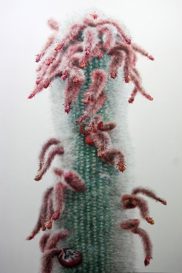 Kwang-Ho Lee hyperrealisticke obrazy kaktusov 5