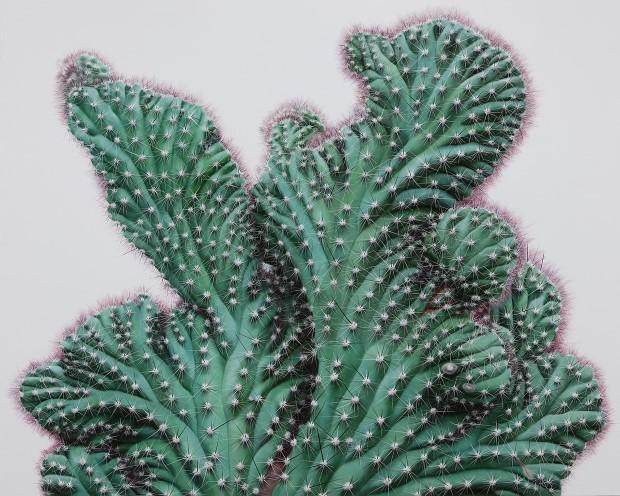 Kwang-Ho Lee hyperrealisticke obrazy kaktusov 7