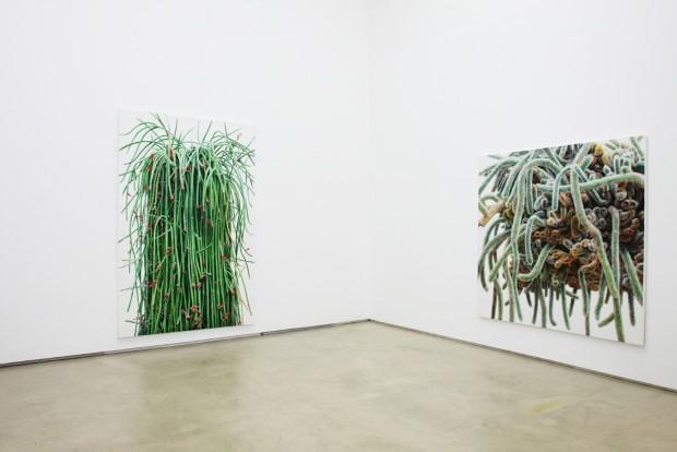 Kwang-Ho Lee hyperrealisticke obrazy kaktusov 9