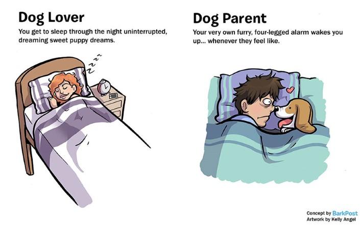 rozdiely medzi milovnikom a majitelom psa 3