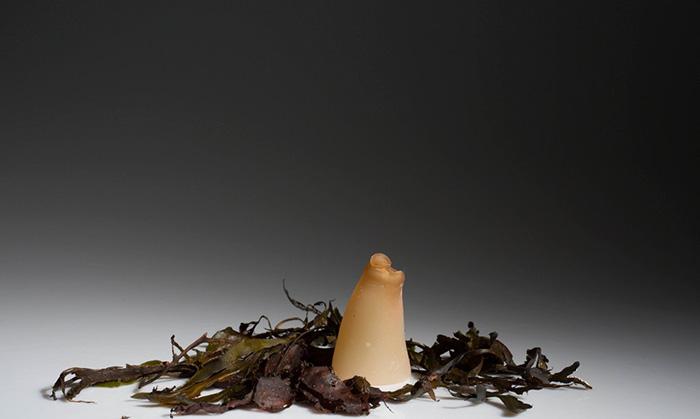 Ari Jonsson biologicky rozlozitelne flase z morskych rias 6