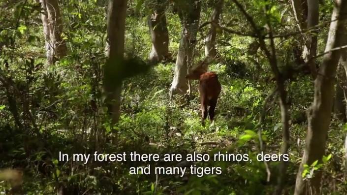 Jadav Payeng majuli vysadzanie stromcekov 10