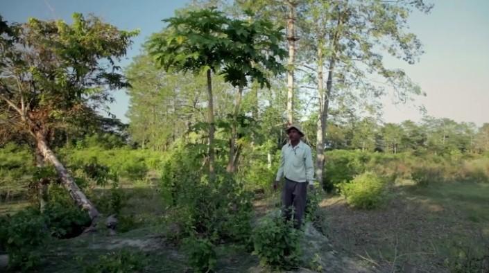 Jadav Payeng majuli vysadzanie stromcekov 13