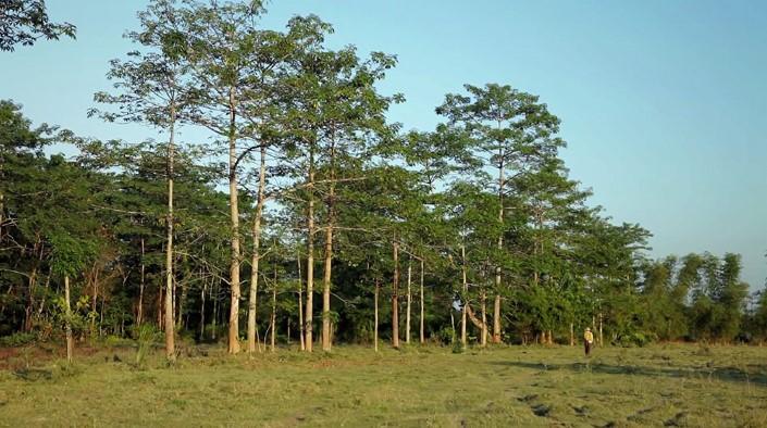 Jadav Payeng majuli vysadzanie stromcekov 4