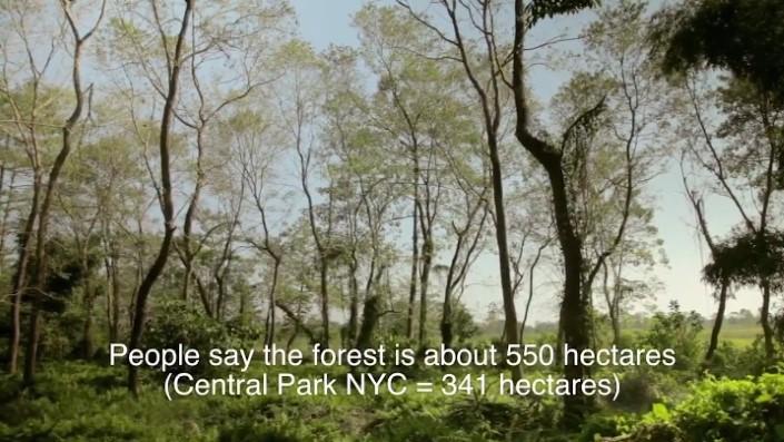 Jadav Payeng majuli vysadzanie stromcekov 7