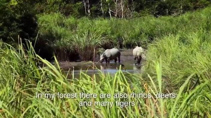 Jadav Payeng majuli vysadzanie stromcekov 9