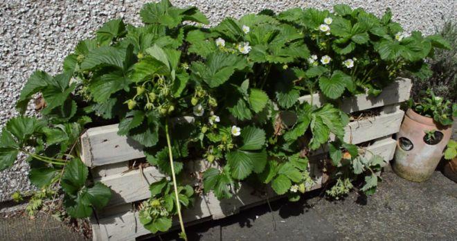 zahradny kvetinac z palety 5