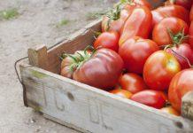 10 potravín, ktoré do chladničky nepatrí | Tipy a triky do kuchyne