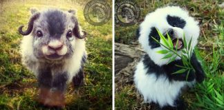 Realistické plyšové zvieratká   Handmade tvorba spod rúk Lee Cross