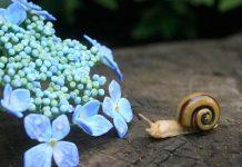 Sošky zo skla | Pod rukami Yuki Tsunoda vzniká sklenený hmyz a kvety