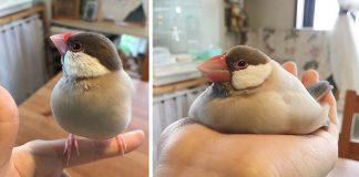 Fotografie zvierat, ktoré vyzerajú, ako keby sa práve roztápali