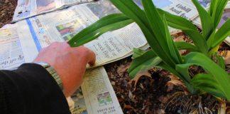 Ako sa zbaviť buriny a skvalitniť pôdu na záhrade novinovým papierom