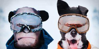 Realistické masky na lyžovanie Beardo - staňte sa zvieraťom na svahu!