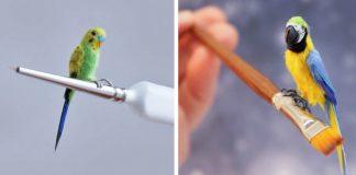 Miniatúry vtákov fascinujú svojou dokonalosťou | Handmade od Katie Doka