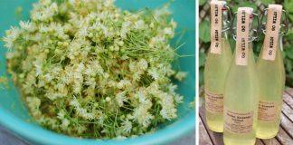 Lipový sirup | Recept na domáci liečivý sirup z lipových kvetov