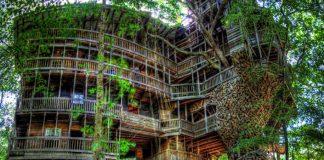 Najväčší stromový dom na svete | Horace Burgess