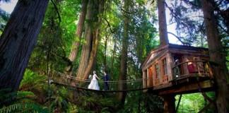Hotel v korunách stromov je ideálnym miestom pre svadby Treehouse