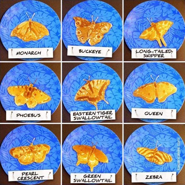saipancakes nathan shields palacinky lievance 1