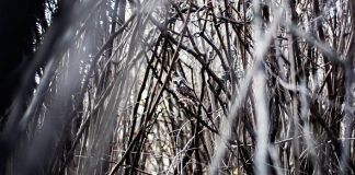 15 ukážok dokonalej kamufláže sovy | Fotografie sov