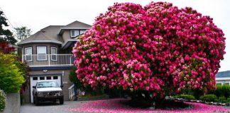 Najkrajšie stromy sveta | 20 fotografií | kreativita.info