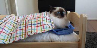 Mačacie pelechy z postieľok pre bábiky | Nápady na pelechy pre mačky
