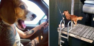 Perfektne načasované fotografie so psíkmi