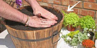 Rozprávková mini záhradka | Návod ako vytvoriť záhradnú dekoráciu