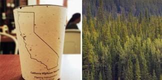 Ekologický pohár na kávu, z ktorého môže vyrásť v strom