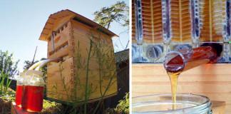 Flow Hive | Med tečúci z úľa, ktorý neruší usilovné včely
