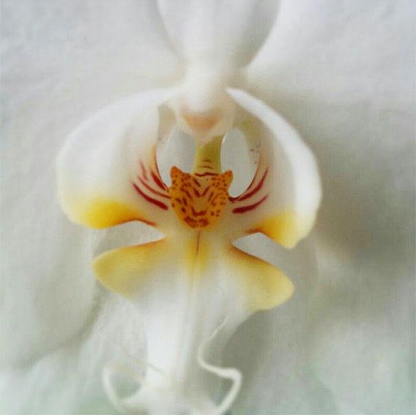 kvety ktore vyzeraju ako nieco ine 11