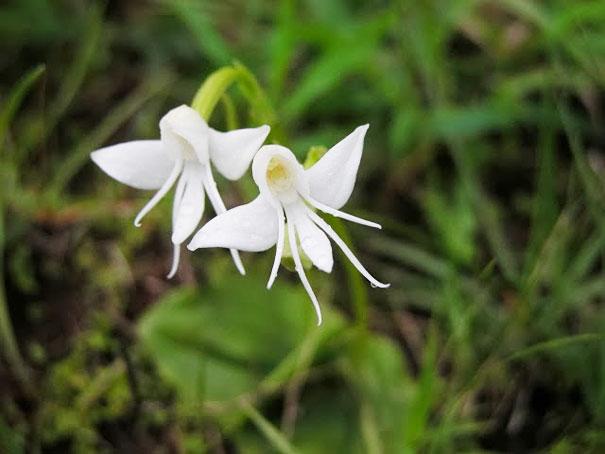 kvety ktore vyzeraju ako nieco ine 13a