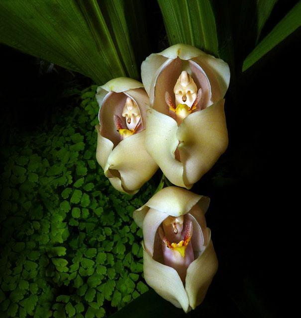 kvety ktore vyzeraju ako nieco ine 7