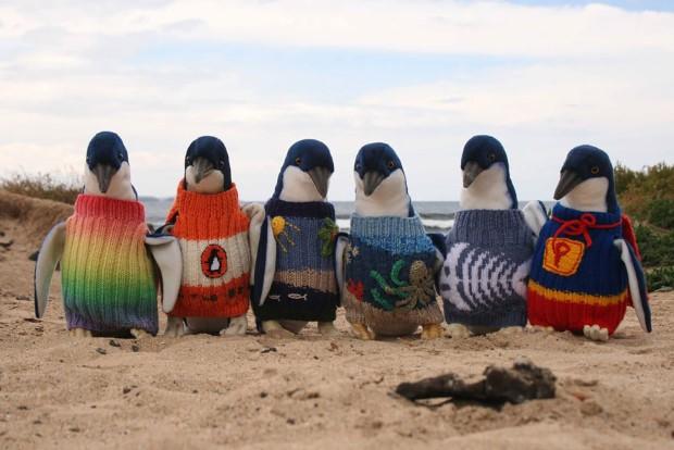 najstarsi muz australie pletie svetriky pre tucniaky 1