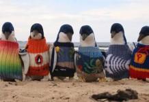 Najstarší muž Austrálie pletie svetríky pre ohrozené tučniaky