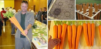 Pestovanie mrkvy ako to nepoznáte!