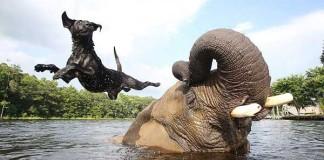 Nezvyčajné zvieracie priateľstvá, ktoré Vám spravia deň #1