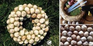 Originálny nápad s návodom na prírodný veniec z ulít slimákov