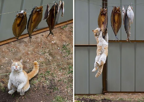 30 dôkazov, že každá mačka je tak trochu ninja 25