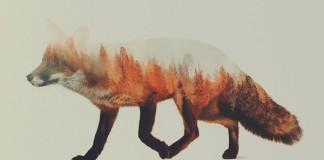 Dvojitá expozícia spájajúca fotky zvierat a krásy prírody, v ktorej žijú