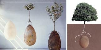 Capsula Mundi | V týchto kapsulách sa po smrti premeníte na strom