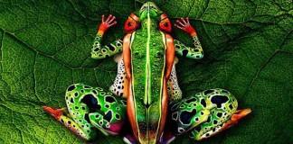 Dokonalý body art inšpirovaný prírodou | Johannes Stötter